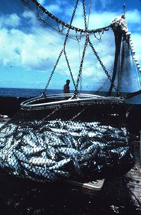 The basket load of fish is now directly over the hole that leads to the freezer compartments