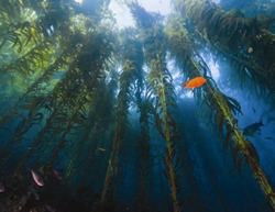 Undersea Forest